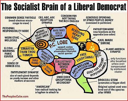 430px-Liberal_Brain